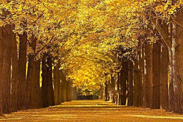 盘点京城八大赏秋地,风景让人惊艳,感受色彩斑斓的北京