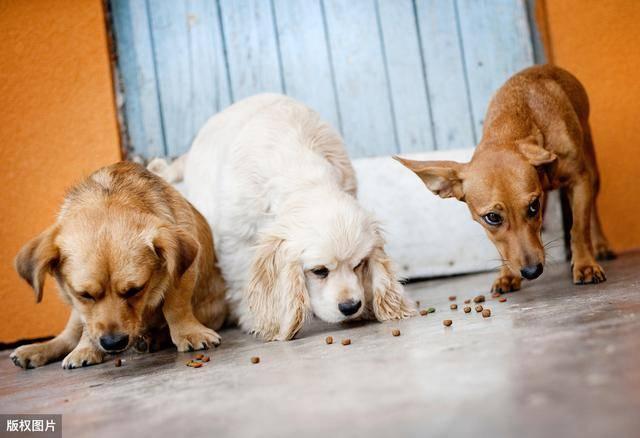 物質 副作用 抗生 犬 犬が水をよく飲む!抗生物質が原因かも?