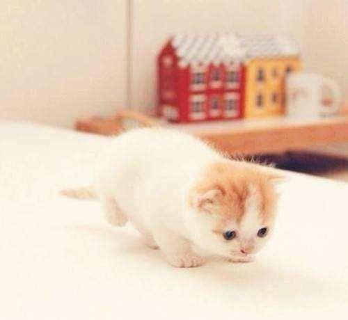 小奶猫肚子大是怎么回事 该怎么办