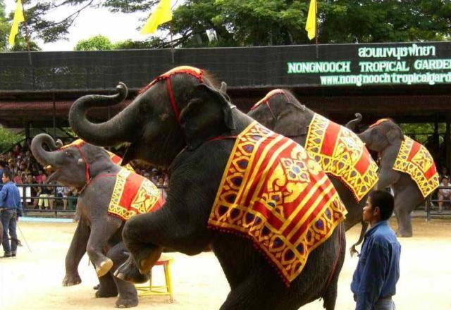 """亲自揭秘:泰国饲养员微笑的背后,是多少""""大象""""的痛苦折磨?"""