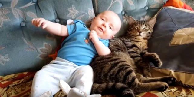 「猫咪」猫咪甘愿给其当靠枕,还懂得适时换姿势,为让小主人睡得舒服