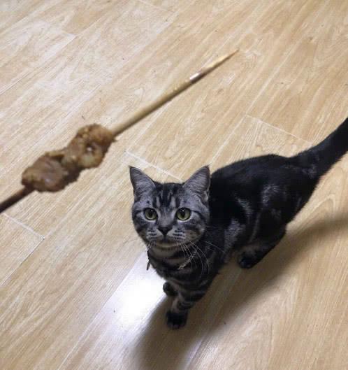 猫咪:被挂在墙上惩罚,猫咪:谁让你不给喵吃,猫咪抢食抓伤主人