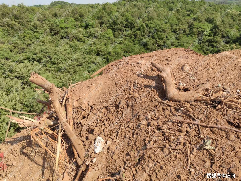 信阳金诺渣土公司涉嫌毁林占田 究竟是谁在背后撑腰
