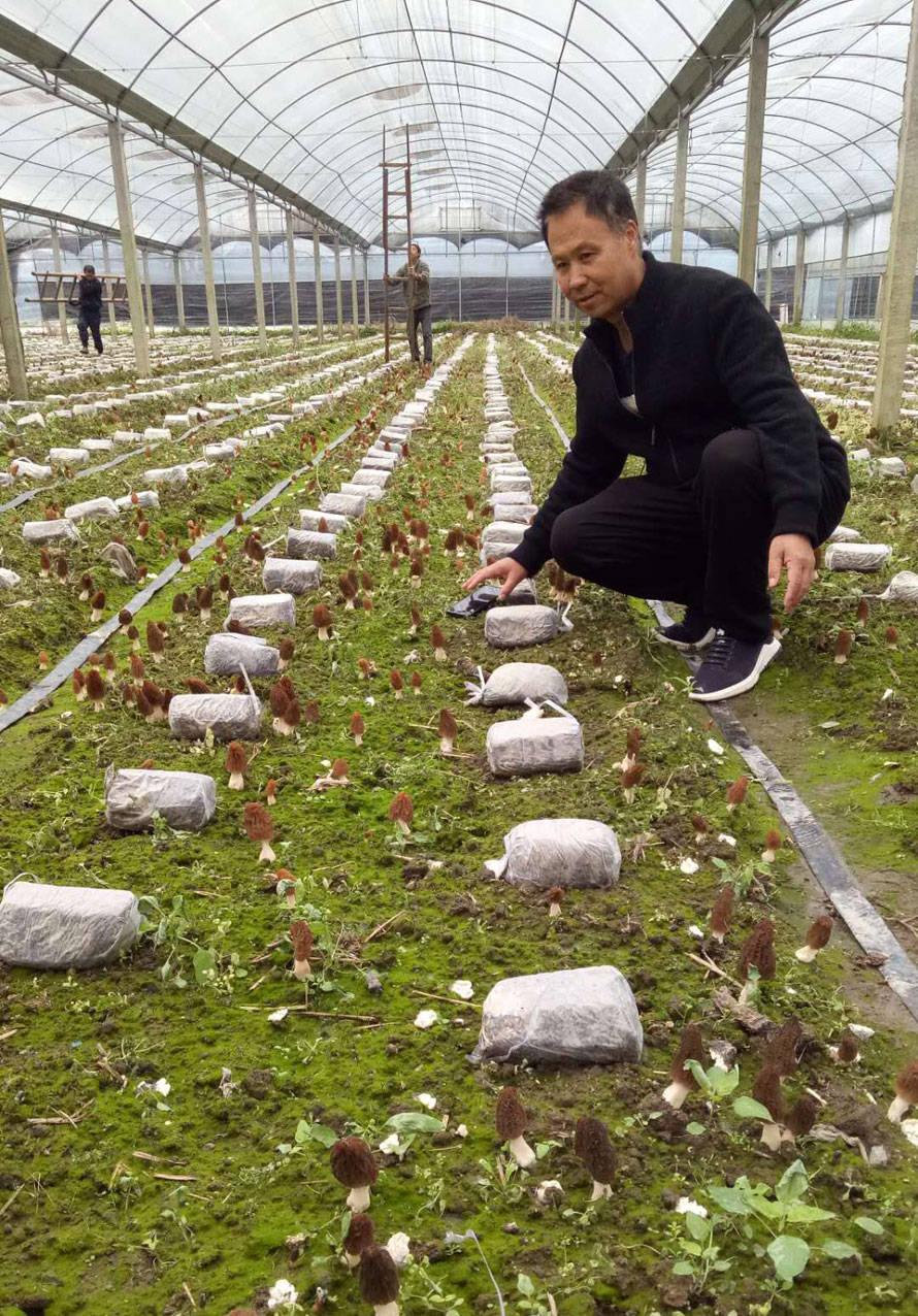 彭兆旺:食用菌产业助力乡村振兴