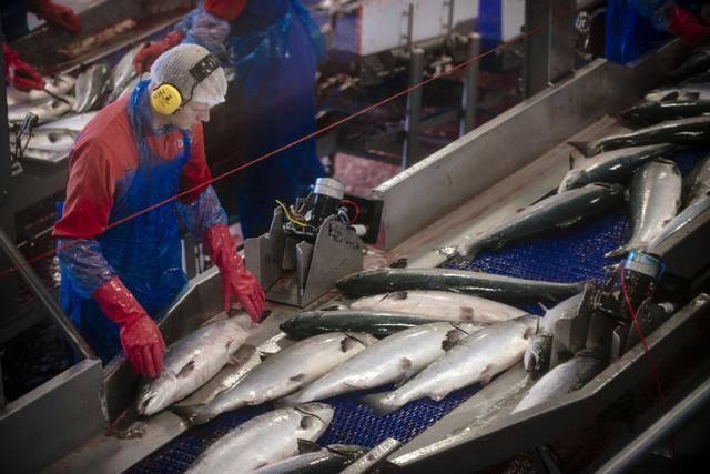 挪威官方数据显示:受疫情影响海产品出口下降,但对华出口增长_庄和闲