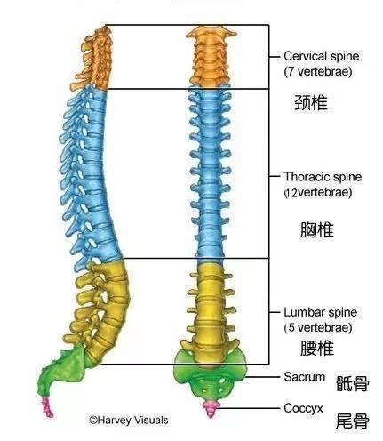 改善脊柱侧弯,早晚坚持练习八个瑜伽动作,让身体越发轻松灵活_手臂