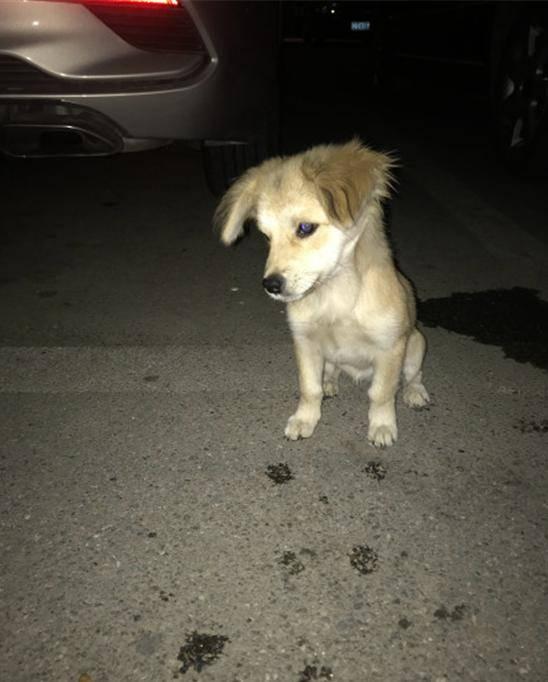 狗狗|谁知把它带家后家里的狗狗生气了女孩遛狗时在小区捡到只流浪狗