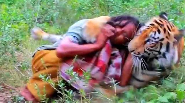 西方玉人放生老虎,5年后人虎相遇,老虎突然朝她扑了上去