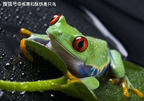 蝌蚪和青蛙是两种不同的生物 这是一场进化论和杂交论的战争图片