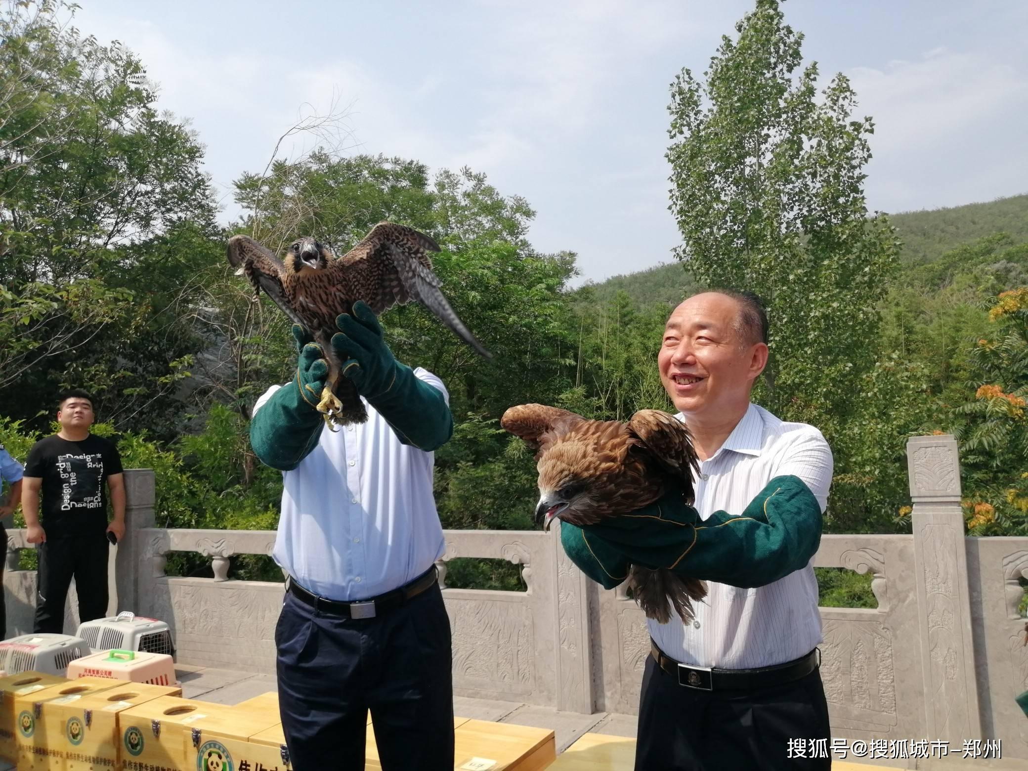 近百只飞禽走兽放归自然 我省野生动物救护工作中规模最大一次