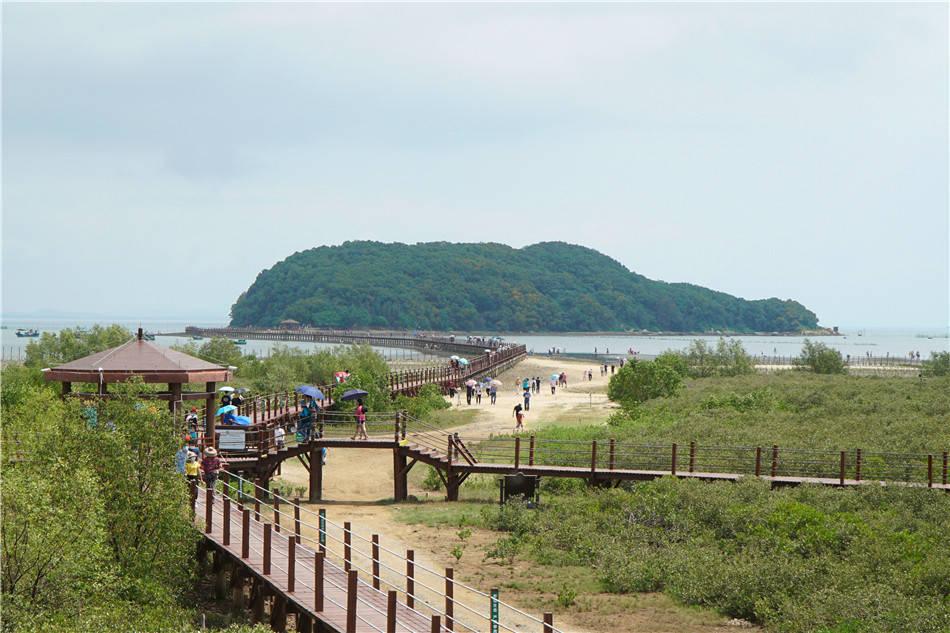 原创             粤西行:阳江,红树林,滩涂好玩耍,别忘抄家伙