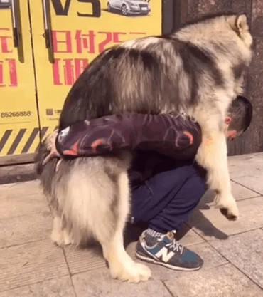 宠物狗装懒不愿走路,各种撒娇非要男子抱,男子心有余而力不足