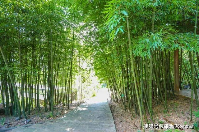 广东乐昌郊区的一个公园,自驾1h就可抵达,乐昌人都喜欢来