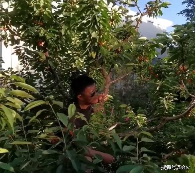 离了导演亲哥没戏拍!杨志刚停工爬树摘果,念诗疑感叹境况太凄凉