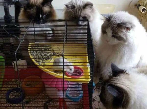 """你给仓鼠住的笼子真的是""""别墅""""吗?最全面的仓鼠笼选购攻略 (图15)"""
