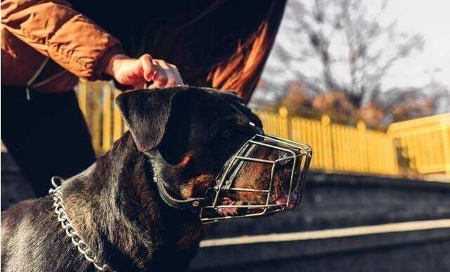 识狗术:若狗狗有这6种特征,最好不要养