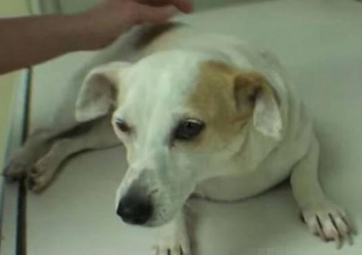 原创 狗狗整天不吃不喝,主人忧郁带去医院,检查后被胃里的器械吓坏