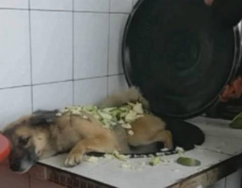 原创 狗狗天天在家惹是生非,主人这次是在是没忍住,抱起就往锅里丢