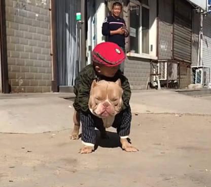 原创 小宝宝趴在狗狗身上,以为狗狗会生气甩开他,下一秒让主人欣慰