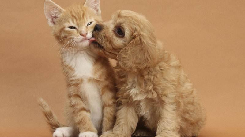 Medicalxpress:意大利超3%的猫和狗体内发现了新冠抗体