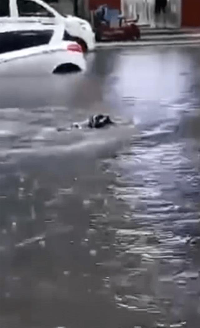 """暴雨实况!市民在马路上潜泳,新乡多条路进入""""看海""""模式"""