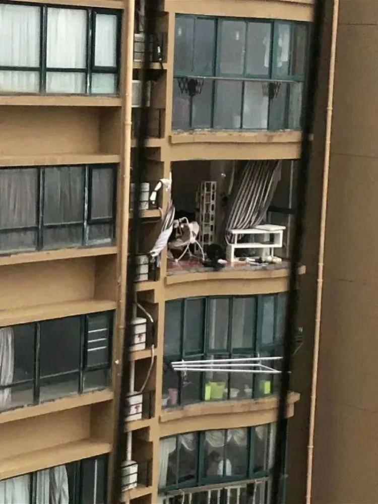 """台风天关外窗坠亡,""""正常""""??"""
