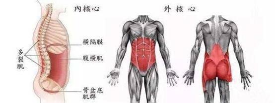 怎么强化核心肌群?一套核心训练,让你腰腹变得强有力!