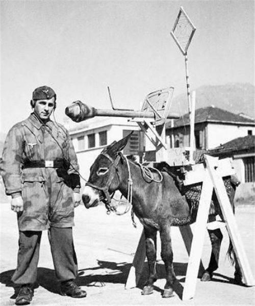 二战唯一的战斗熊:几百斤炮弹扛起就跑,会抽烟喝酒,还有工资卡