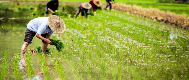 2020年农村将迎来新福利!5项补贴发放到位,事关每个农民利益