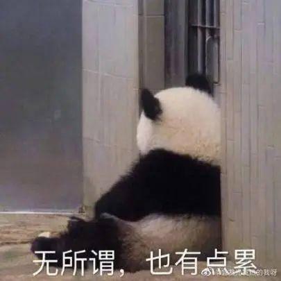 """【新Panamera来了】极致性能与豪华舒适的""""你侬我侬""""?"""