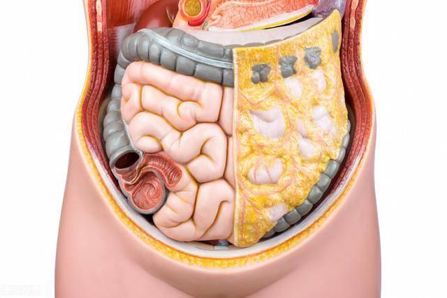 腰腹脂肪怎么减?坚持这3个方法,降低内脏脂肪,恢复平坦小腹!