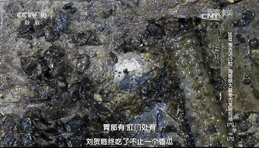 江西和湖南考古中均发现了一种工具?古