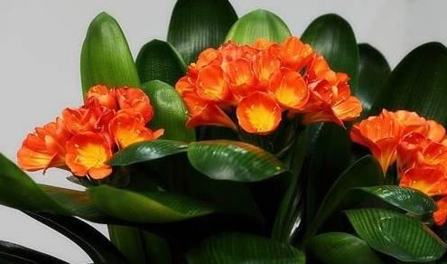 三种花放在一个花盆里,灰尘少的空气更