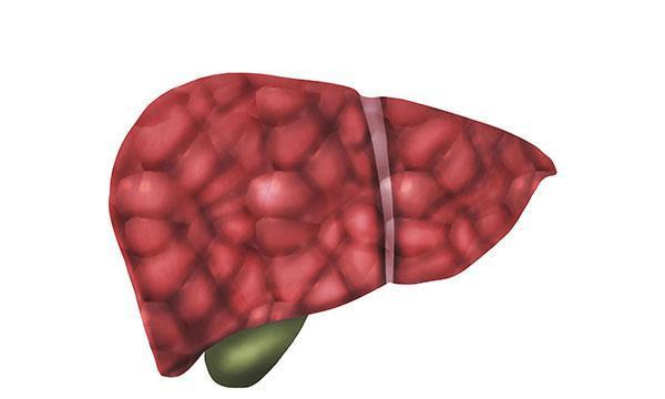 人体的每个器官都有重要的作用和功能
