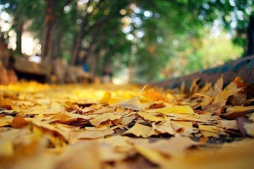 """秋季用山楂干泡水喝能""""软化血管""""?原来这3种好处,很少人知道"""