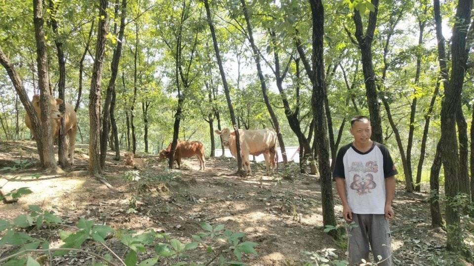 西峡县田关镇:积极推进金融扶贫政策