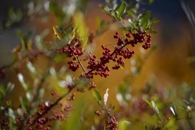 秋天的神农架,层林尽染到了最佳观赏期,让人流连忘返!