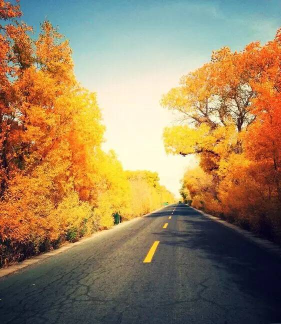 新疆胡杨林照片大全,美到让人窒息