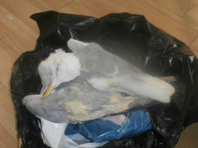 为了一份三明治,英国装潢工虐杀海鸥,面临4万罚款和6个月刑期