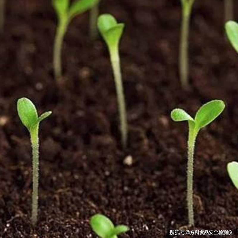 有机蔬菜用什么肥料好