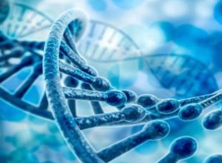 人类想要实现基因编程,欠缺的是盘算机