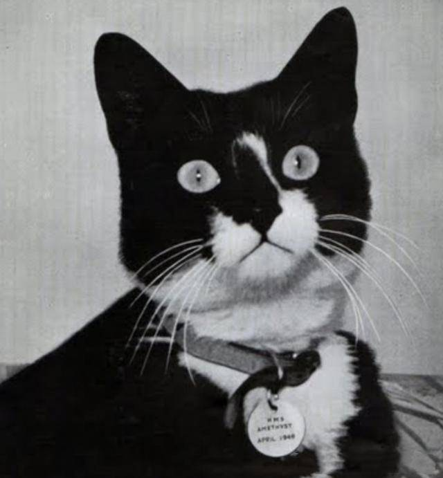 二战中,英国战舰获得一只德国猫,为何带上战舰不