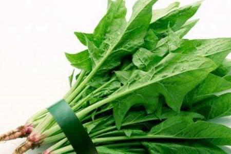 五星体育直播:注意吃菠菜 虽然有好处 但是这种人不能吃 现在知道还不晚!