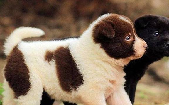 宠物主人要注意 买狗的时候这五句话不能说 不然容易被坑!