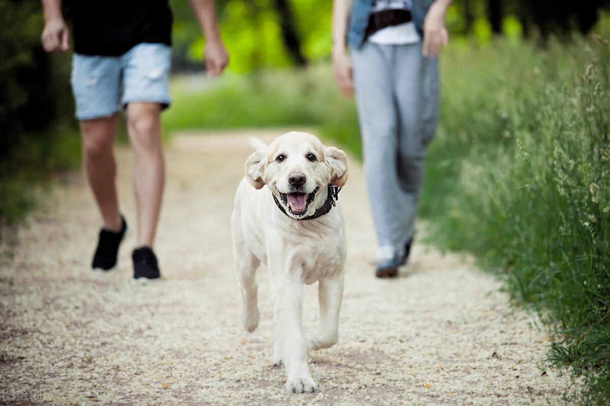 坚持走路有什么好处?走路锻炼的正确方式,你学会了吗?