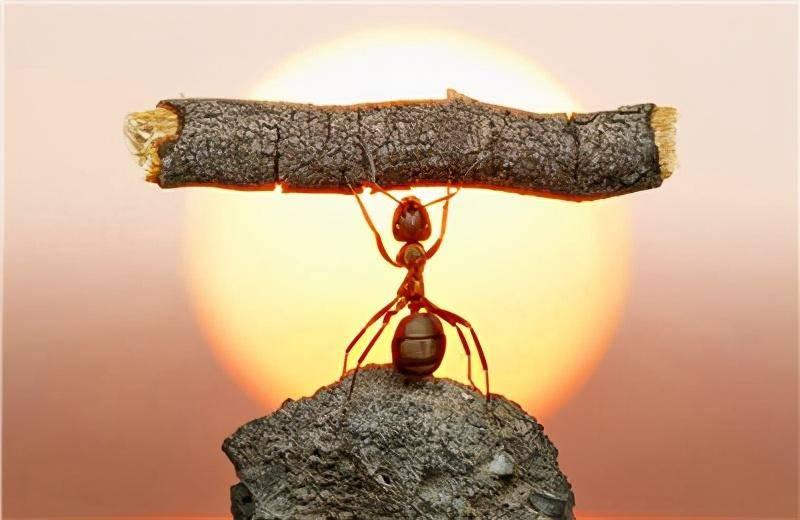 """六年前的忠告:马云的""""蚂蚁"""",本就不必撼动大树!"""