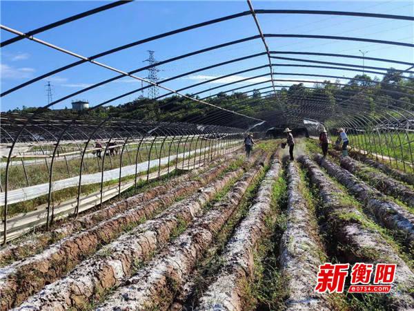 雁峰区开展农业面源污染防治工作 发展与污染治理两不误