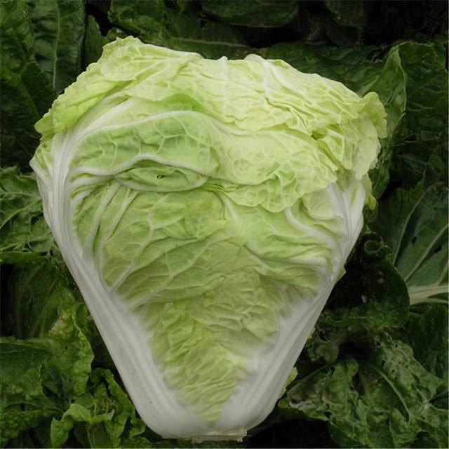 冬天应该吃大白菜还是娃娃菜?营养师:相差不是一星半点,要选对