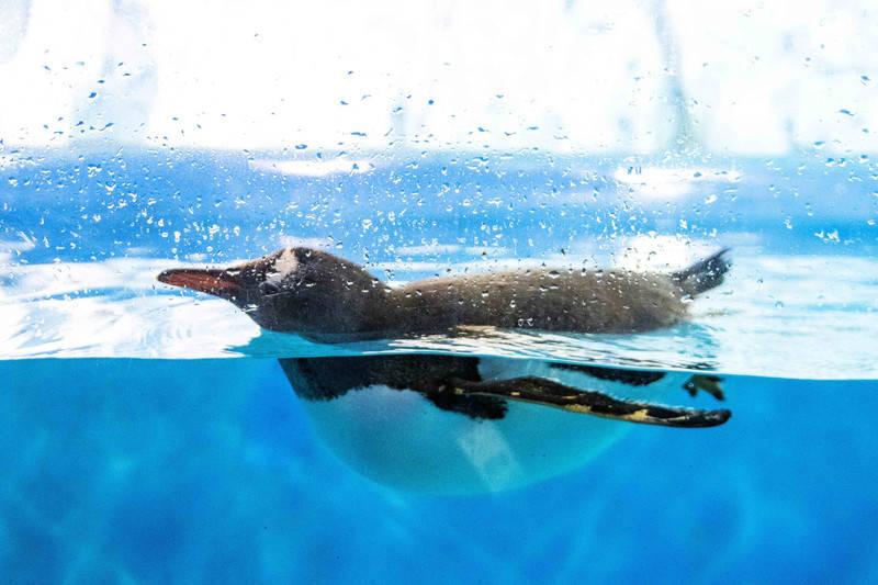 福州这个景区不用潜水就能看到神秘的海底世界,超适合亲子游