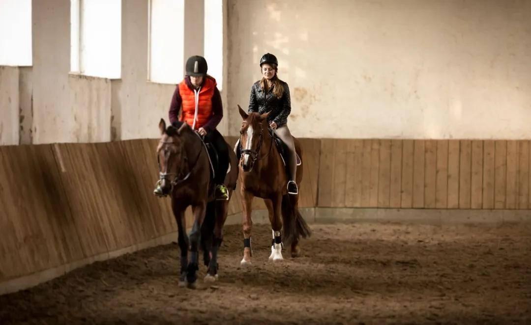 马匹为了达到更好的热身效果需要做的四件事